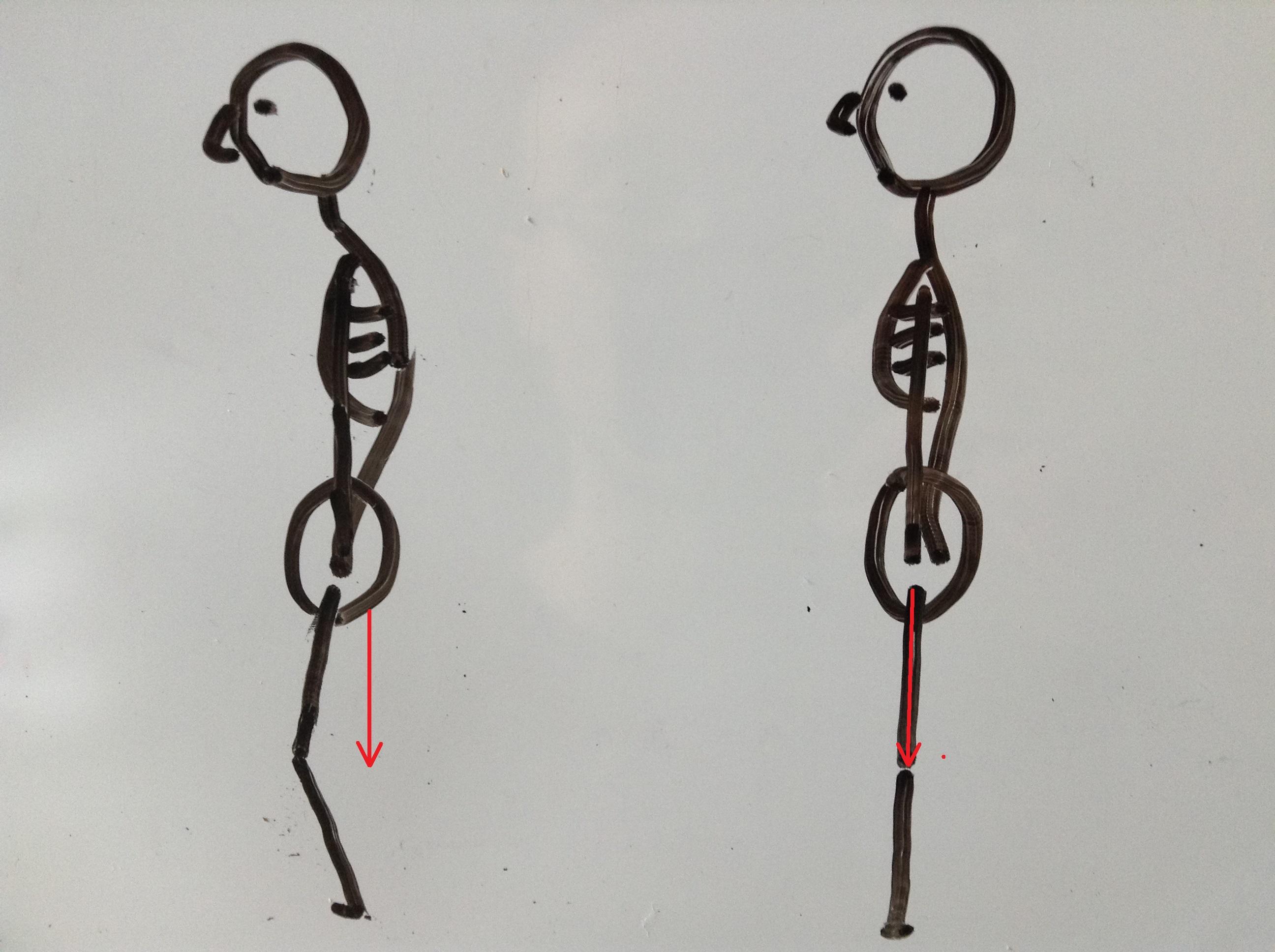 骨格 重心位置