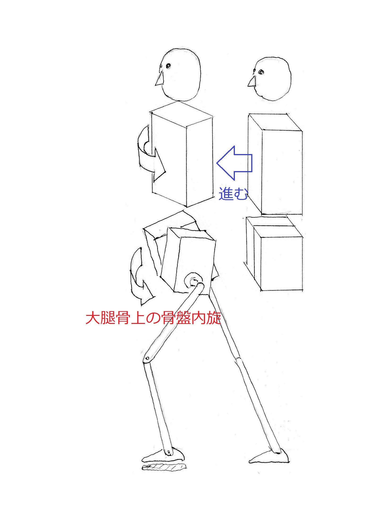 『歩き』という動作の本質