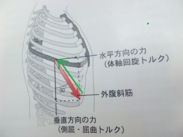 特別な訓練引き上げに関係する肋骨の特別な動かし方