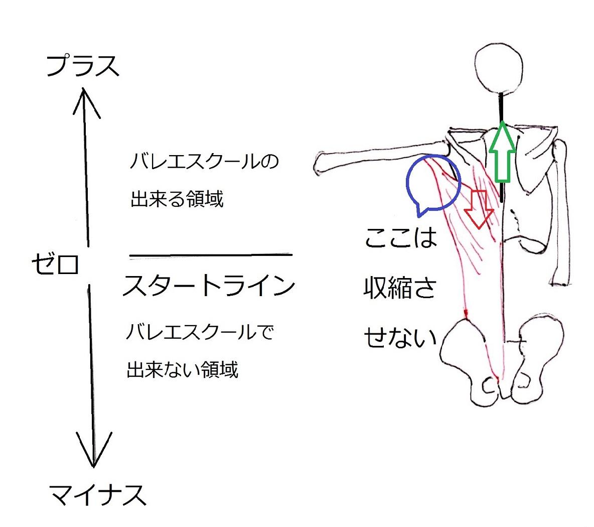 肩甲骨と肋骨のコントロール