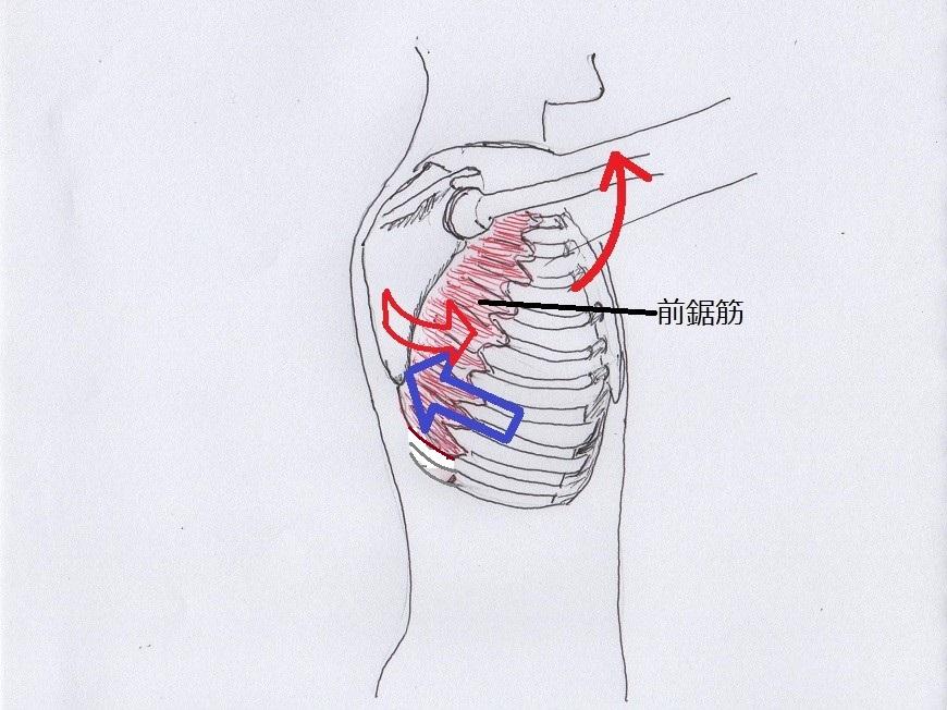 肋骨のコントロール